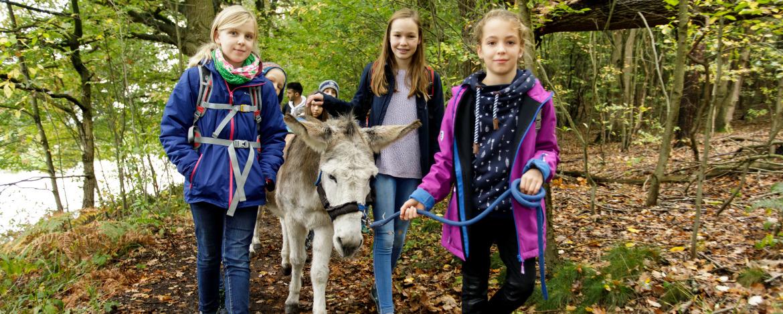 Esologie und Eselwanderung