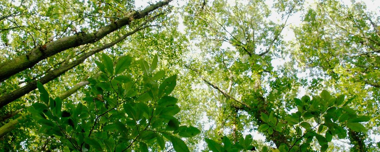 Wald in der Nähe der Jugendherberge Brüggen