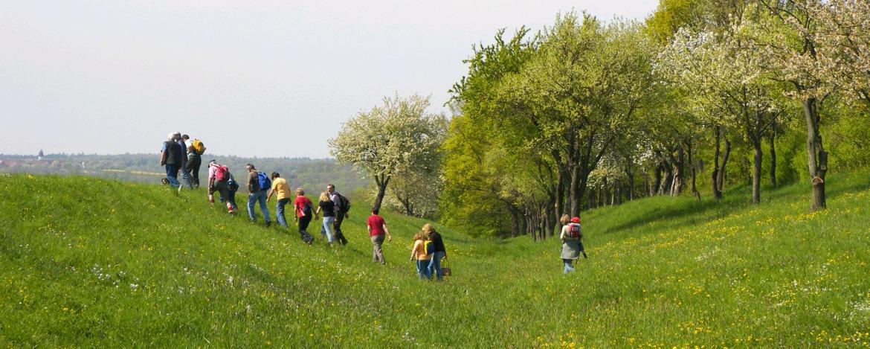 Wandern im lieblichen Taubertal