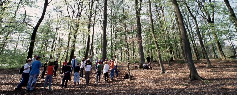 Entdeckertour im Wald