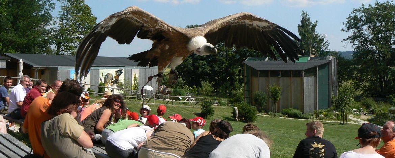 Der Greifvogelpark in direkter Nachbarschaft, die modernste Falknerei Europas