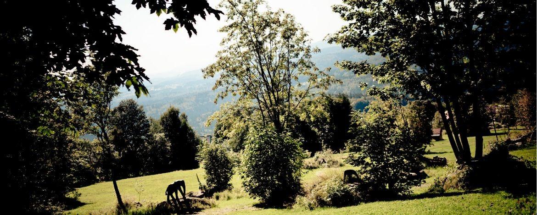 Blick über den Nationalpark Bayerischer Wald