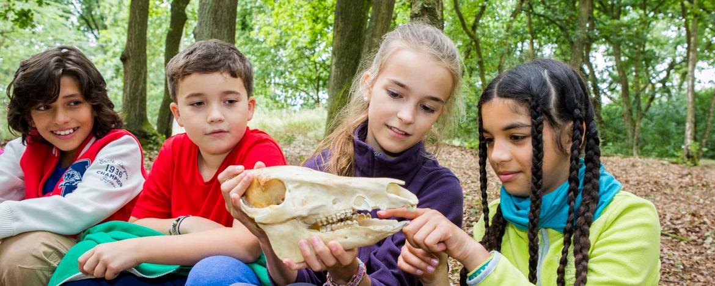 Erforschen der Tierwelt