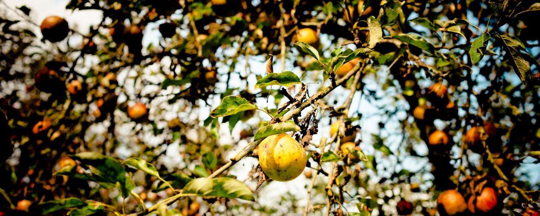Bunte Blätter - eine tolle Herbststimmung erleben