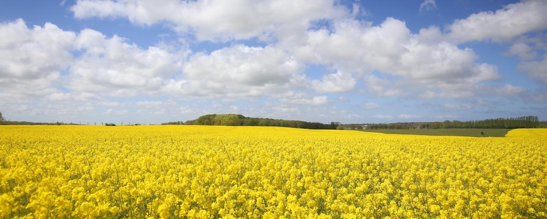 Blühende Landschaft in Niebüll