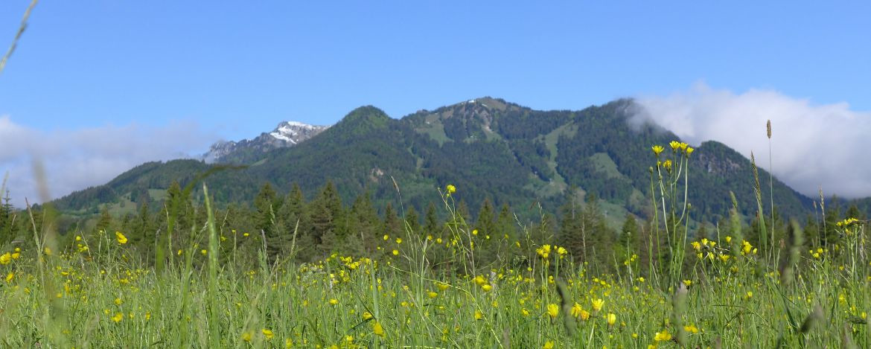 Brauneck mit Frühlingswiese