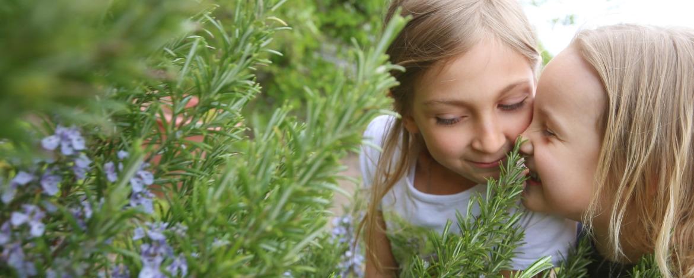 Duftender Kräutergarten der Jugendherberge Niebüll