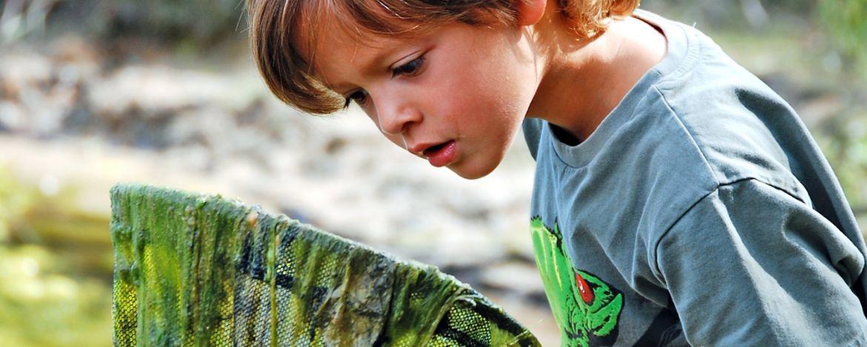 mit dem Kescher die Natur entdecken