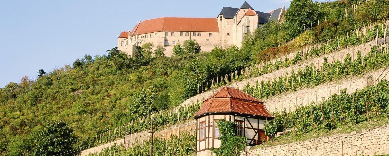 Weinberg mit Schloss Neuenburg