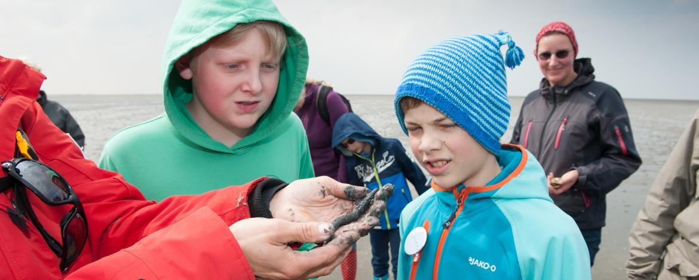 Wattenmeertiere der Nordsee bestaunen