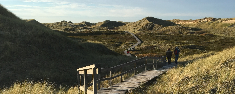 Landschaft der Insel Amrum