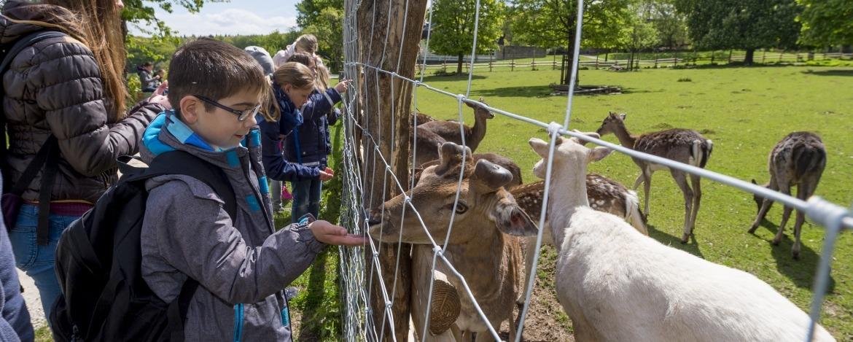Tierpark am Jagdschloss im Niederwald – Jugendherberge Bingen