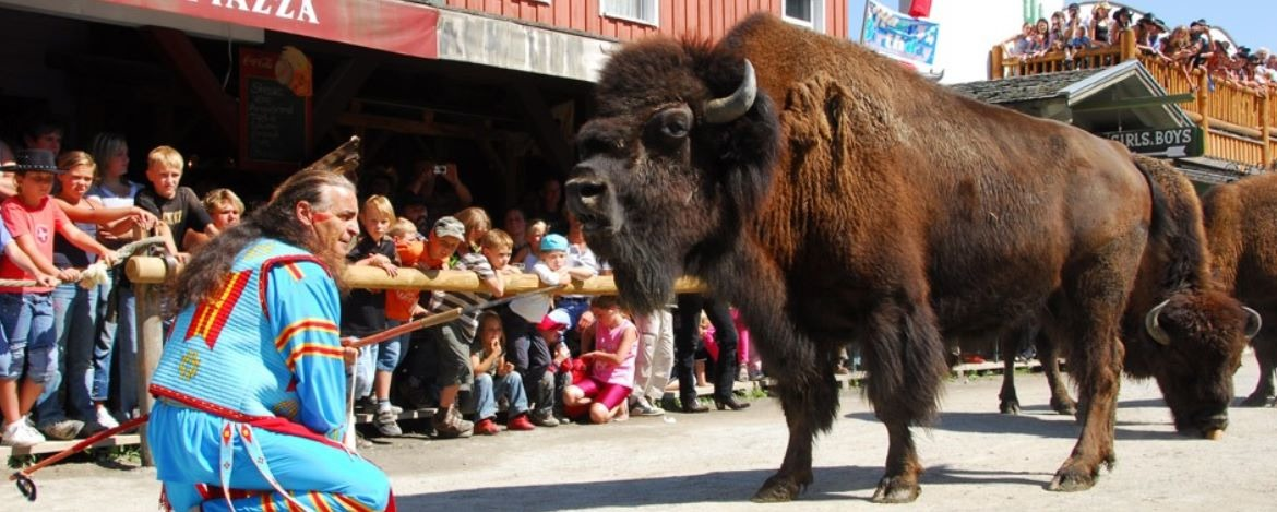 Bisons in Pullman City