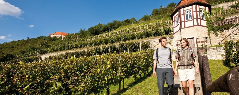 Im Herzoglichen Weinberg in Freyburg (Unstrut)