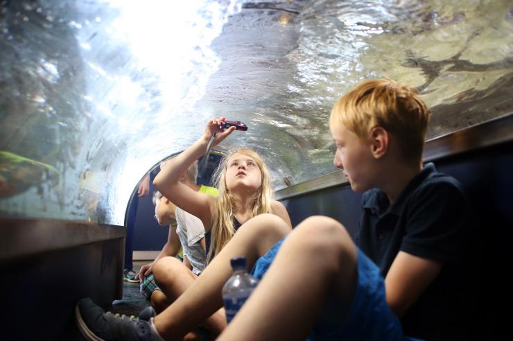 Erlebnis Nordsee im Multimar Wattforum