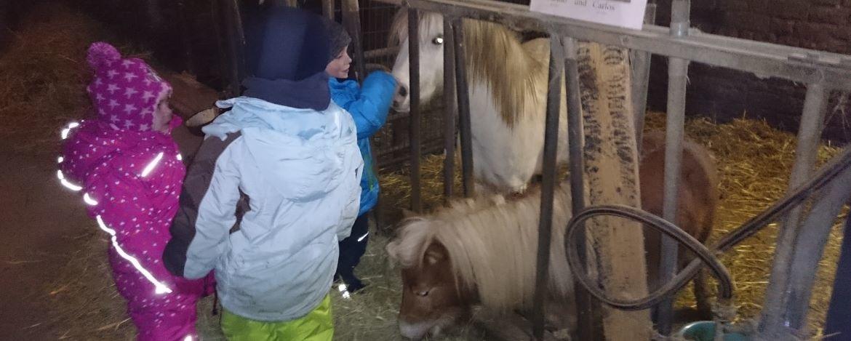Bauernhofbesuch bei den Ponys