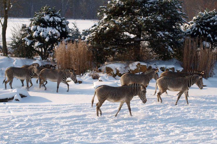 Zoo Leipzig im Winter