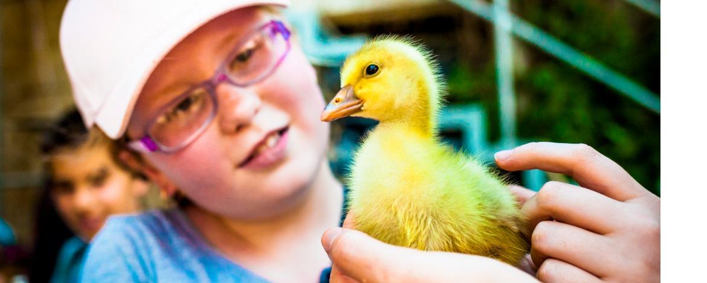 Klassenfahrt mit Besuch eines Bauernhofs in Bayern