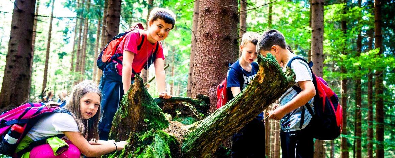 Klassenfahrt mit Waldexpedition in Franken