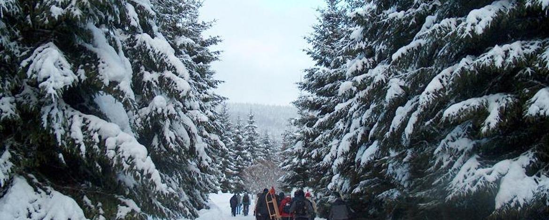 Winterwaldwanderung
