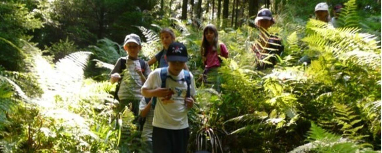 Wandern im Schwäbischen Wald