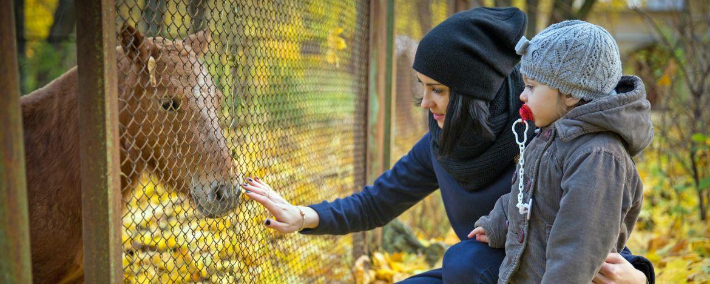 unterwegs im Tierpark