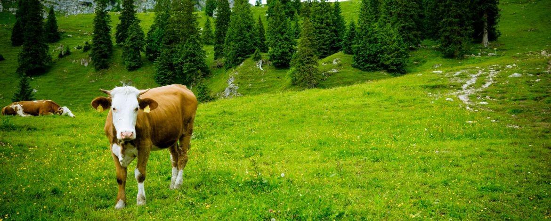 günstiger Urlaub in der Natur