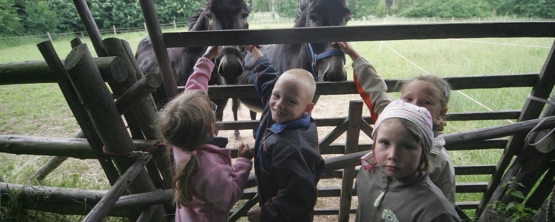 Bei den Eseln