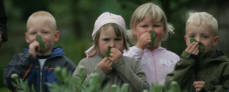Nach was riechen denn diese Blätter - Natur zum Anfassen und Ausprobieren