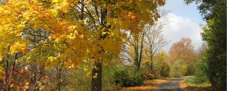 Taubertal im Herbst