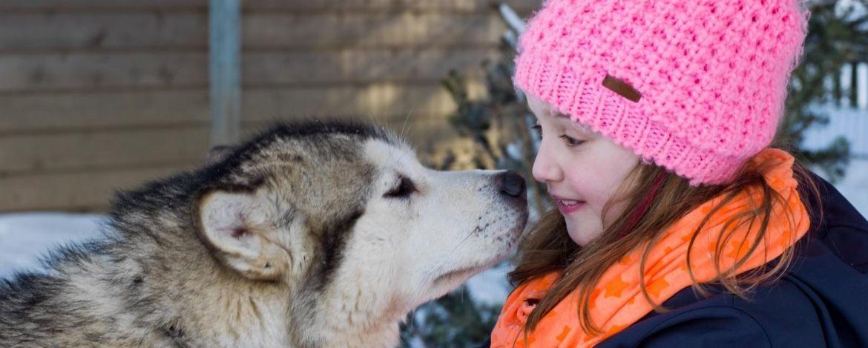 Wandern mit Huskys in der Jugendherberge