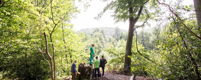 Wald erkunden