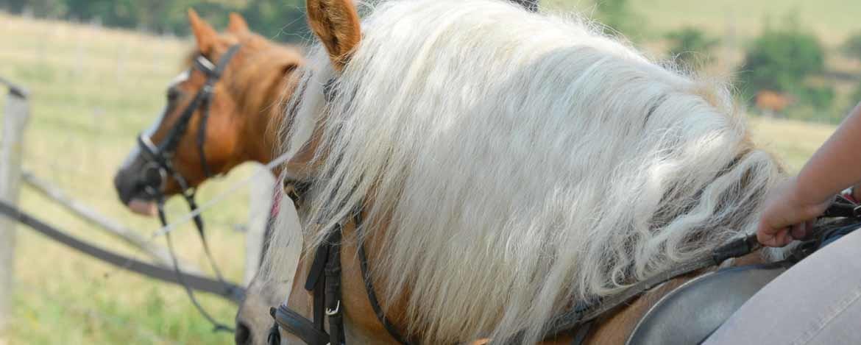 Pferdemähnen