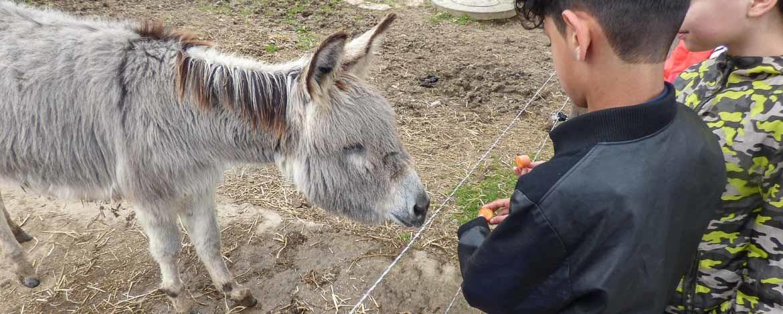 Begegnung mit Tieren