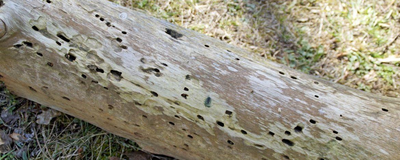 Spuren in der Natur erkennen