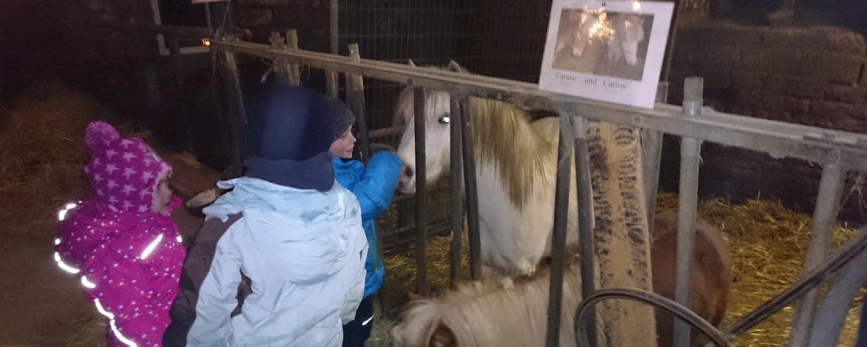 Kinder beim Pony streicheln