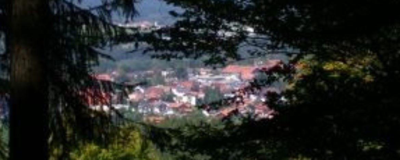 Blick auf Titisee-Neustadt