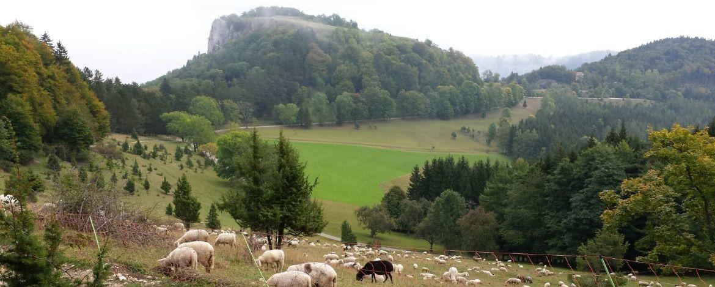 Schafe vor dem Lochenstein