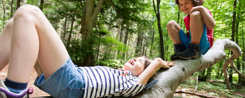 Entspannen im Wald
