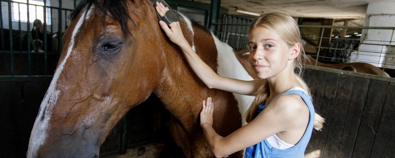Pflege der Pferde: Ein Mädchen pflegt ihr Reitpferd.