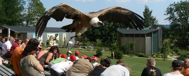 Besuch der Falknerei mit Greifvogelshow