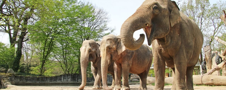 Die Altersresidenz für Asiatische Elefanten ist ein besonderes Tierschutzprojekt im Zoologischen Stadtgarten Karlsruhe. Bild: Zoo Karlsruhe/Timo Deibl