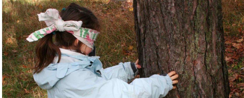 Baum mit verbundenen Augen ertasten
