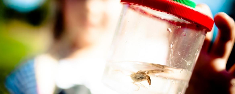 Mit Becherlupen den Lebensraum Biotop erforschen