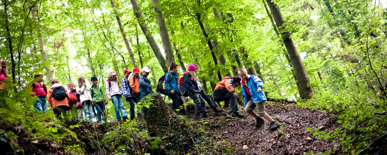Waldhäuser-Rallye
