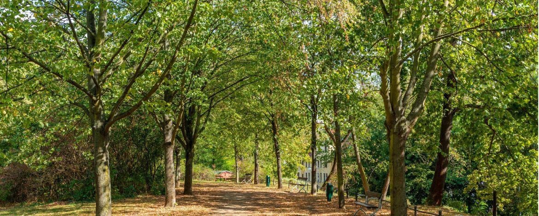 Parkanlage Magdeburg