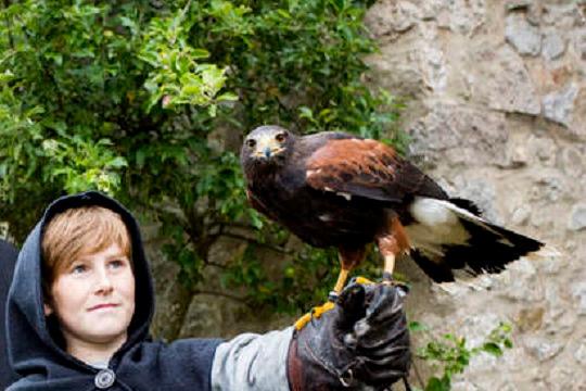 Mit Adler und Falke auf Du und Du