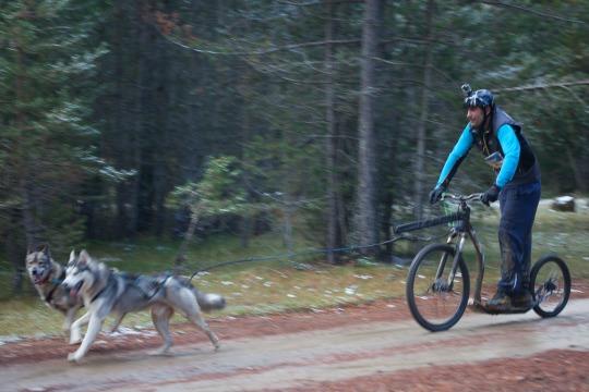 Huskie-Wochenende im Solling